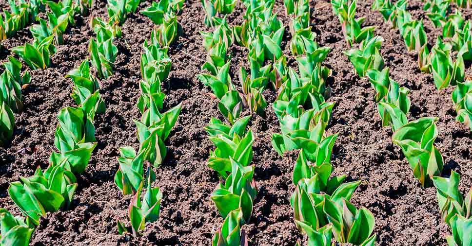 Dicas de como preservar o solo