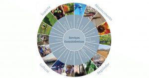 saiba quais são os tipos de serviços ecossistêmicos
