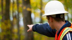 Importância de um engenheiro florestal para o mundo.