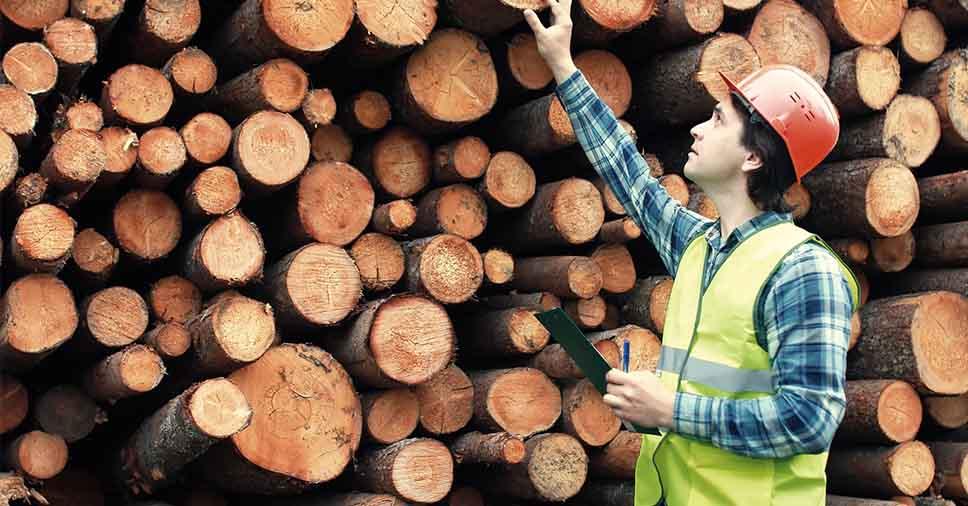 Qual a importância de um engenheiro florestal?