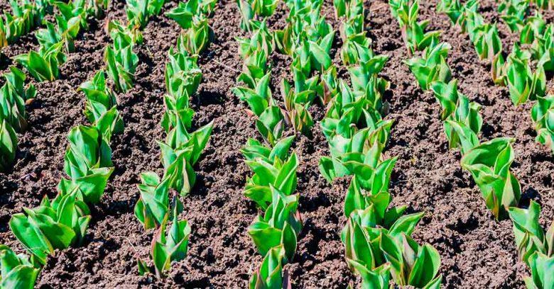 Informações sobre como como preservar o solo.