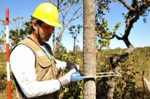 Classificações de inventário florestal