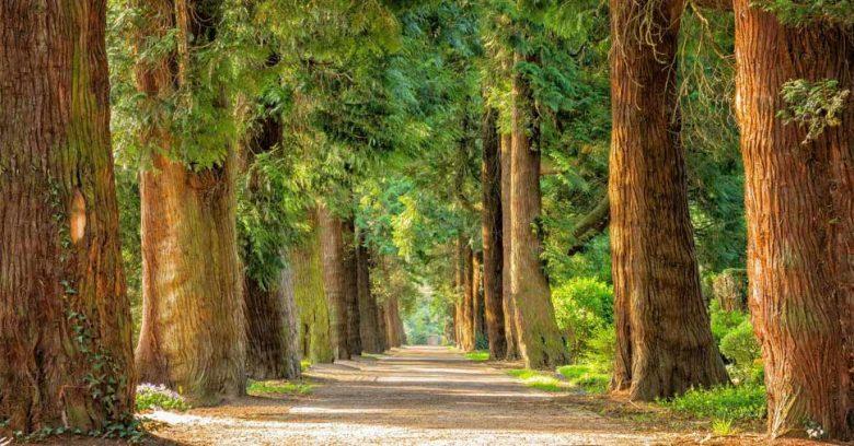Entenda o que é Inventário Florestal e suas classificações