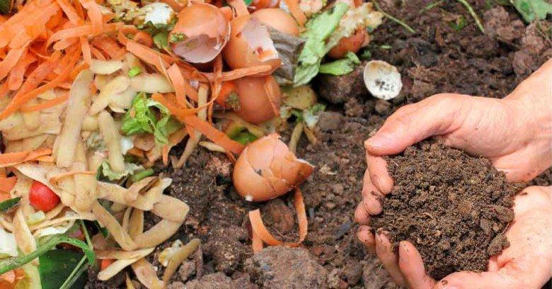 Saiba como fazer a compostagem do lixo orgânico da sua empresa