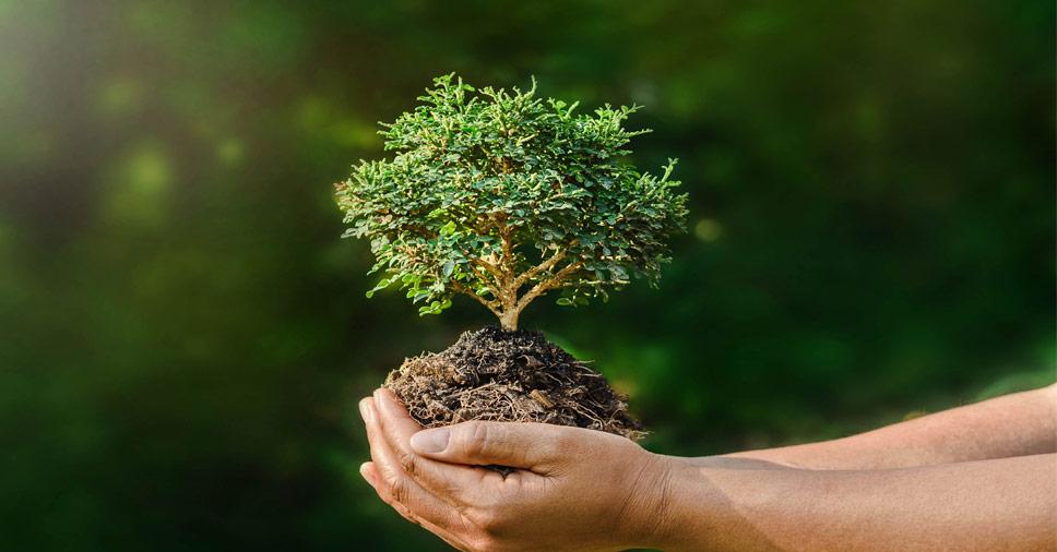 Investigação Ambiental: entenda o que é