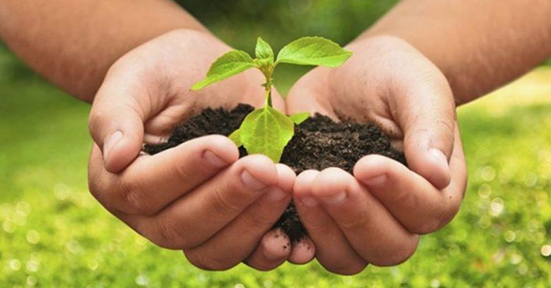 3 alternativas para substituir a utilização de agrotóxicos