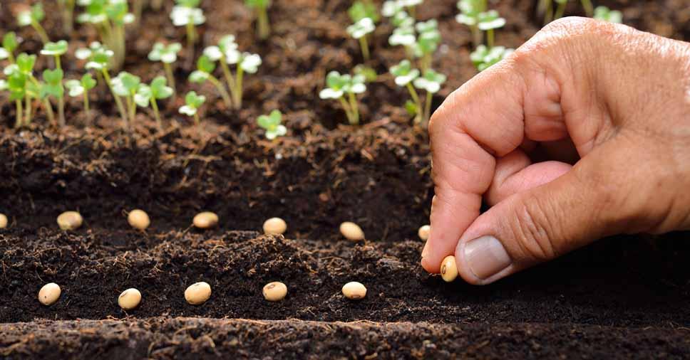 Como a conservação do solo afeta a produção de alimentos?