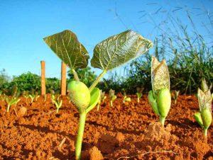qualificação e conservação do solo