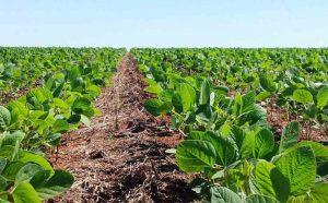 recuperação e conservação do solo