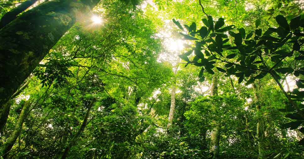 Entenda a importância das árvores