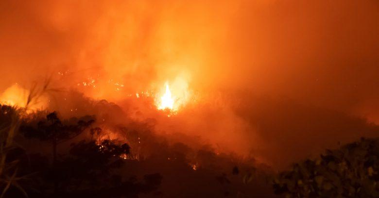 Incêndio na Amazônia: desastre que chocou o mundo!