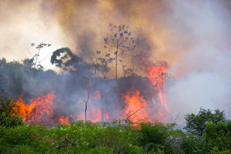 Floresta em fogo: entenda o Incêndio na Amazônia