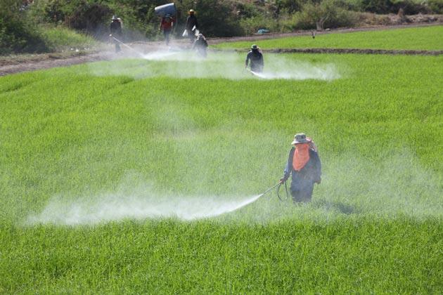 Trabalhador atuando durante a contaminação da água por agrotóxico