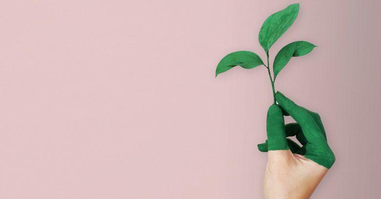 preservação e conservação ambiental