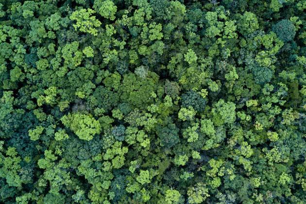 o que saber sobre preservação e conservação ambiental