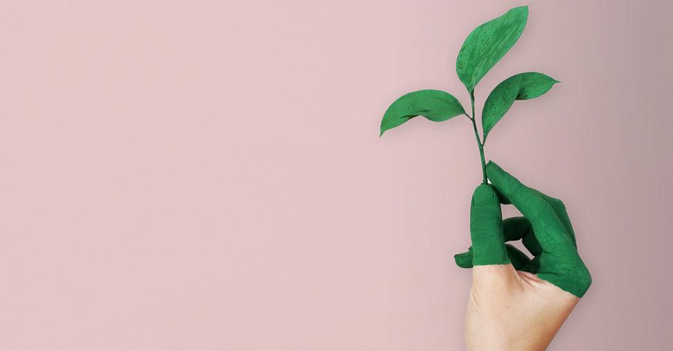 Você sabe a diferença entre preservação e conservação ambiental?