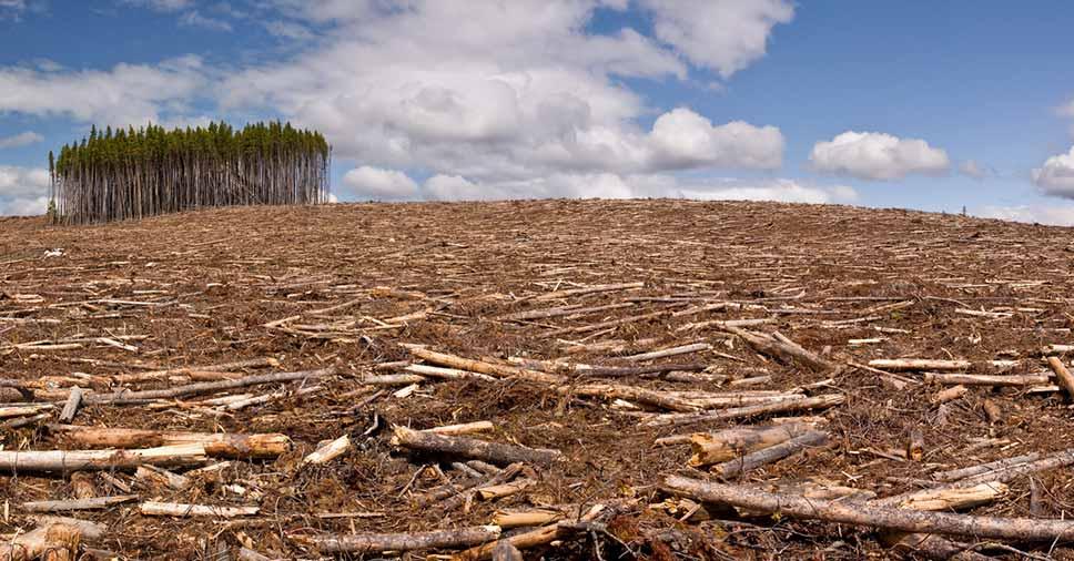 3 principais danos ambientais causados pelo homem