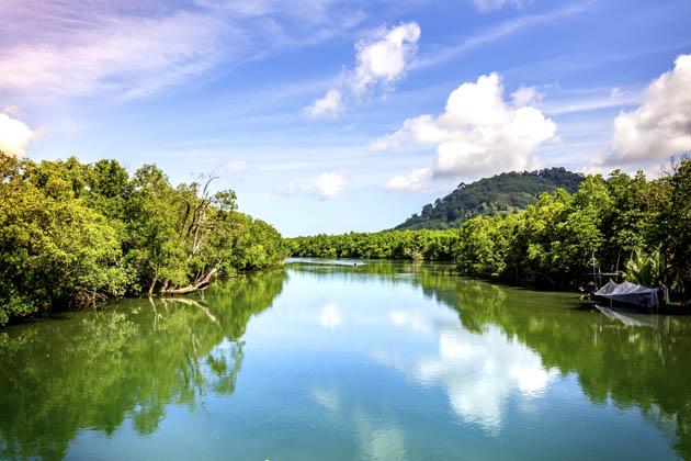 Um rio com diversas árvores ao redor simbolizando uma zona úmida em local distante da cidade