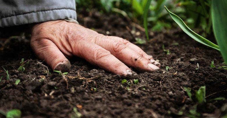 Mão sobre a terra o que é remediação ambiental