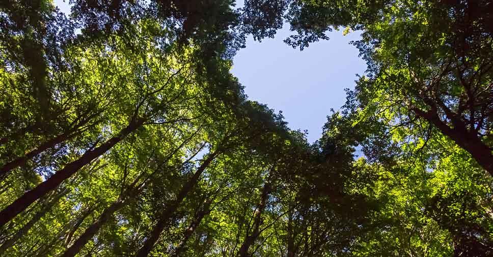 Gestão ambiental: como fazer a proteção dos recursos naturais?
