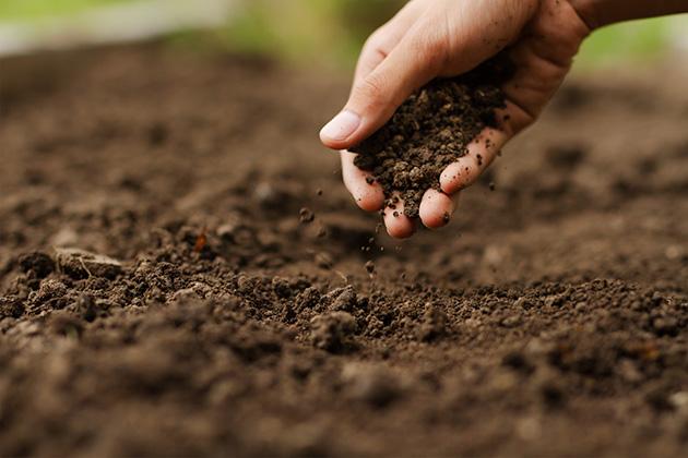 mãos adubando exemplificando o que é o dia do solo