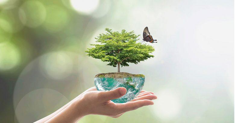 Na imagem vemos uma representação de um ecossistema saudável. Veja qual a importância do Dia Mundial do Meio Ambiente!