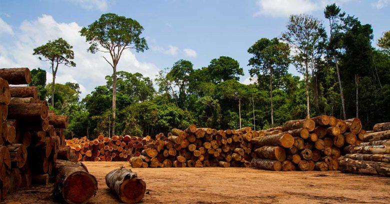 Na imagem vemos árvores. Já conhece os selos ambientais brasileiros? Leia este artigo!