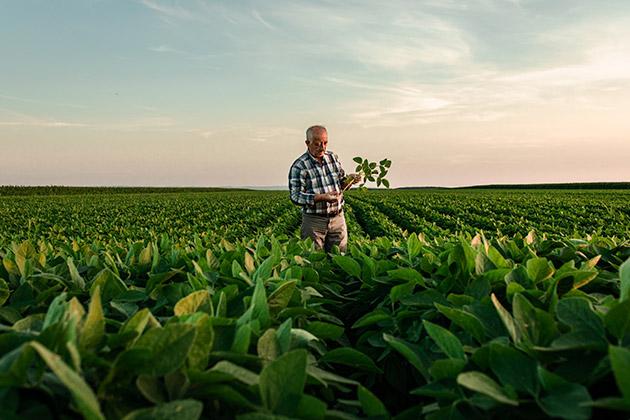 Vemos um senhor realizando a agricultura sustentável.