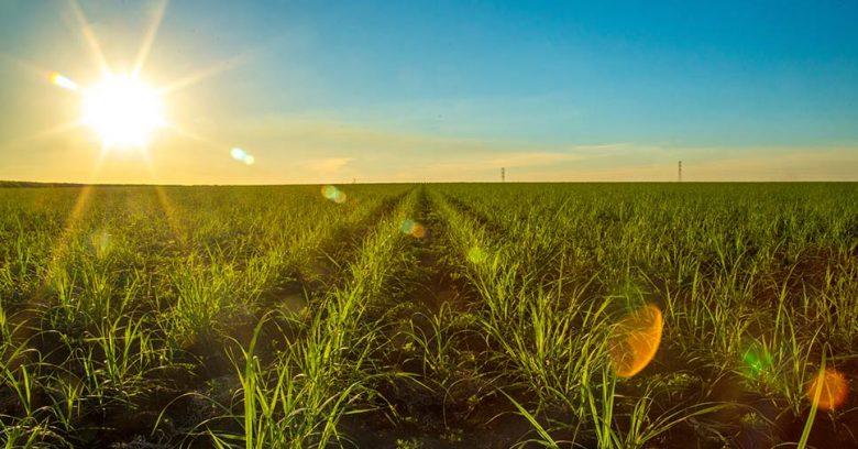 Vemos uma área de plantação. Entenda o que é a agricultura sustentável!